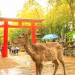 奈良県の日本100名城